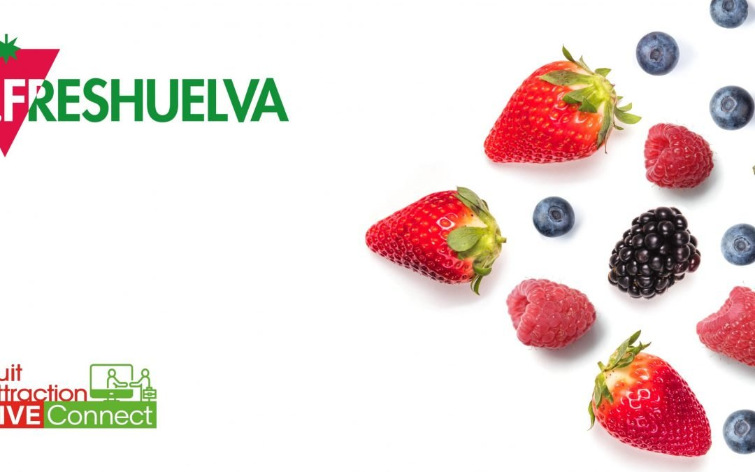 Freshuelva ends the campaign with a production of 281,000 tons of strawberries